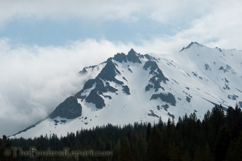Lassen Volcanic National Park Audubon birding trip. Photo: Larry Jordan of the birder's report