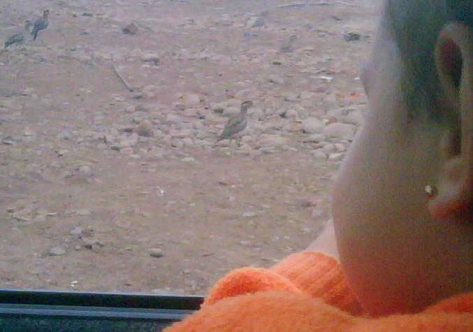 Luciana birdwatching Thickknee IMG00193-20091019-1706