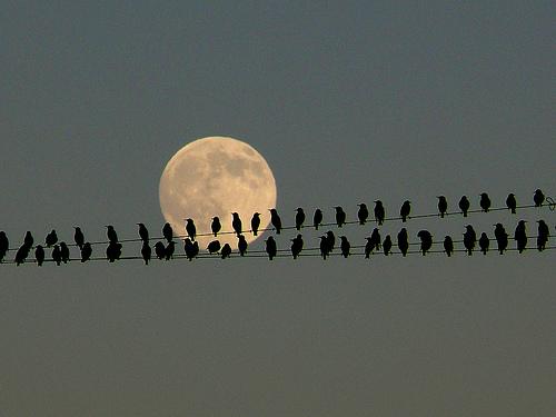 Birding Facebook Friends on-line!