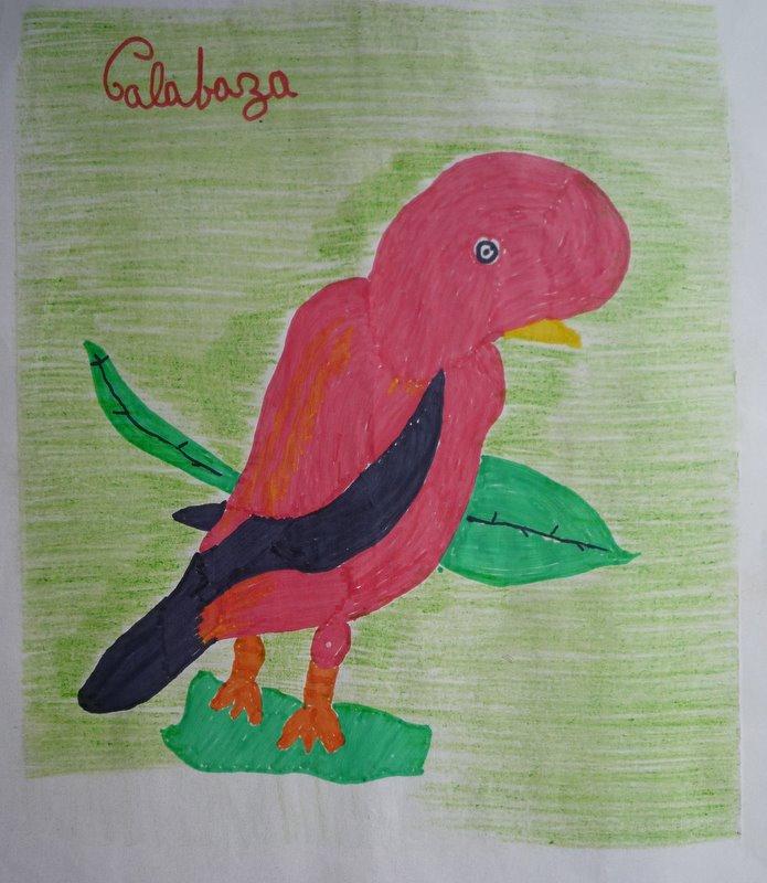 Cock of the Rock - by Ruth. Apaya-Calabaza. Satipo road