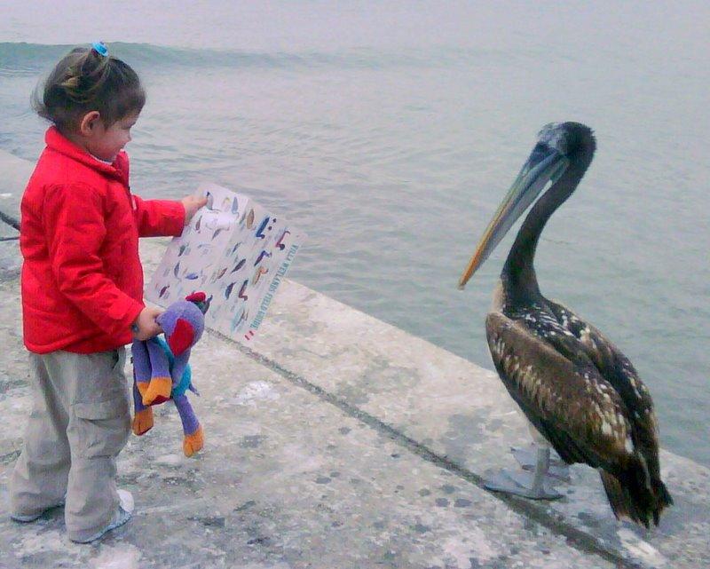 Zen of Birdwatching