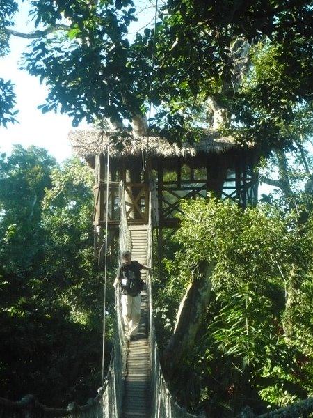 Canopy Walkway Reserva Amazonica Gunnar