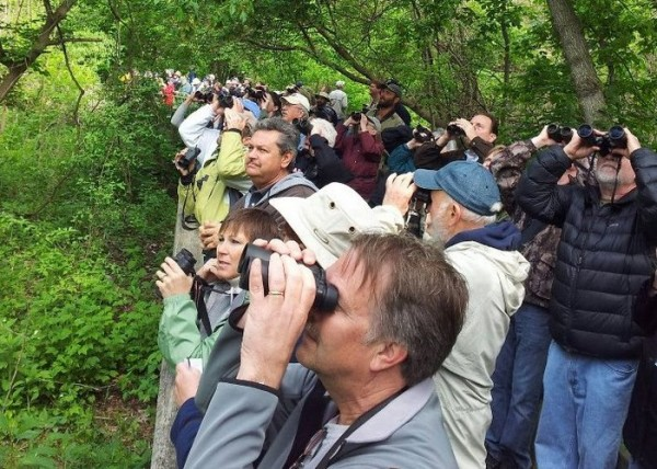 Birders at Magee Marsh boardwalk, Ohio