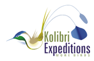 Kolibri Expeditions - Peru Birding Tours and Birdwatching Holidays Worldwide